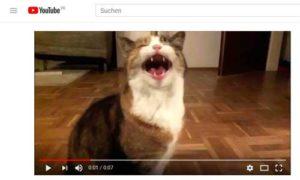 Video mit Smartphone - querformat